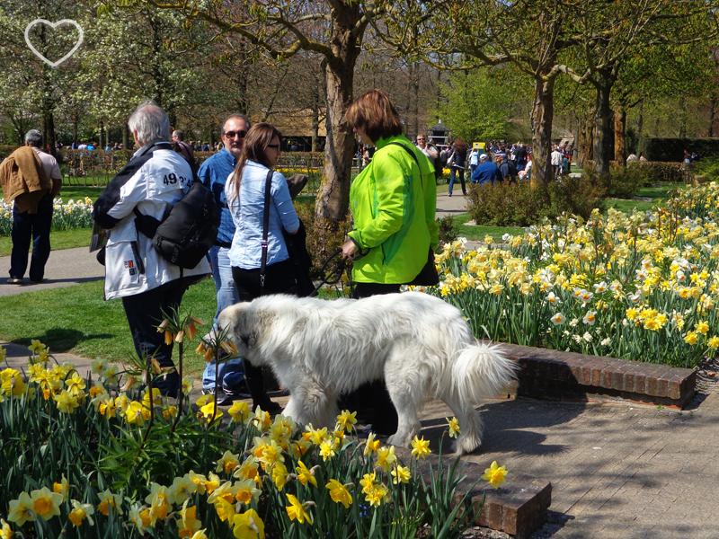 Uma mulher com um cachorro, passeando.