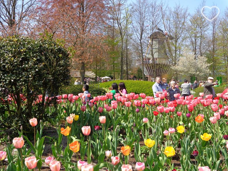 Foto da paisagem, com as flores e as pessoas visitantes.