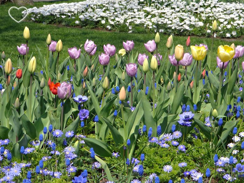 Mais um canteiro de flores de cor lilás, amarelo e azul.