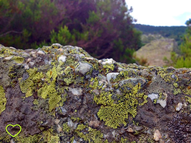 Imagem de líquens verdes nas pedras.
