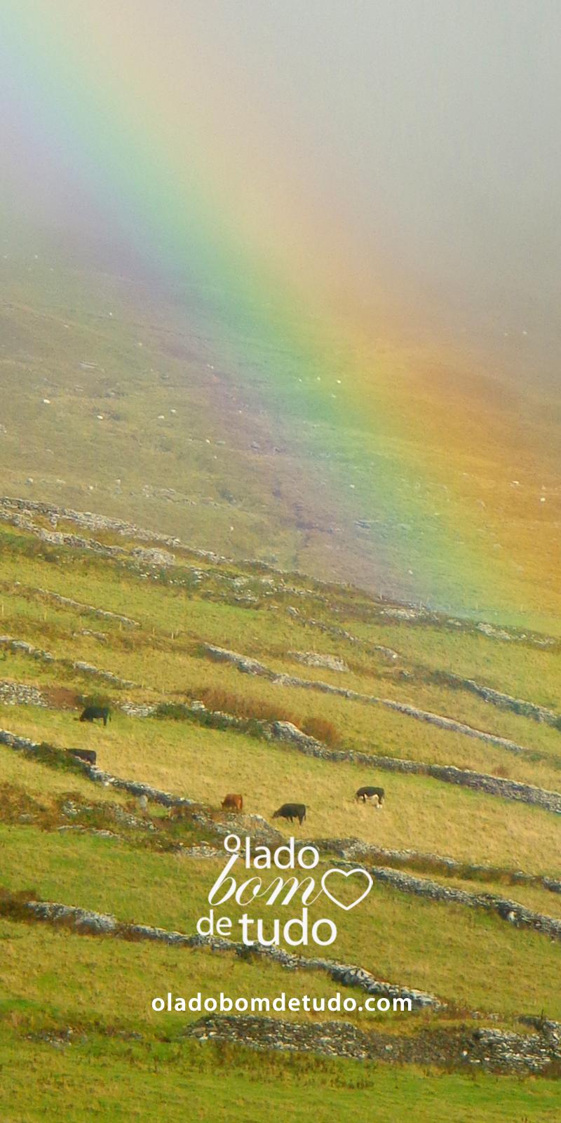 Detalhe do arco-íris em Dingle, Irlanda, em um prado verdinho, um céu bem nublado e muitas vaquinhas e ovelhas pastando.