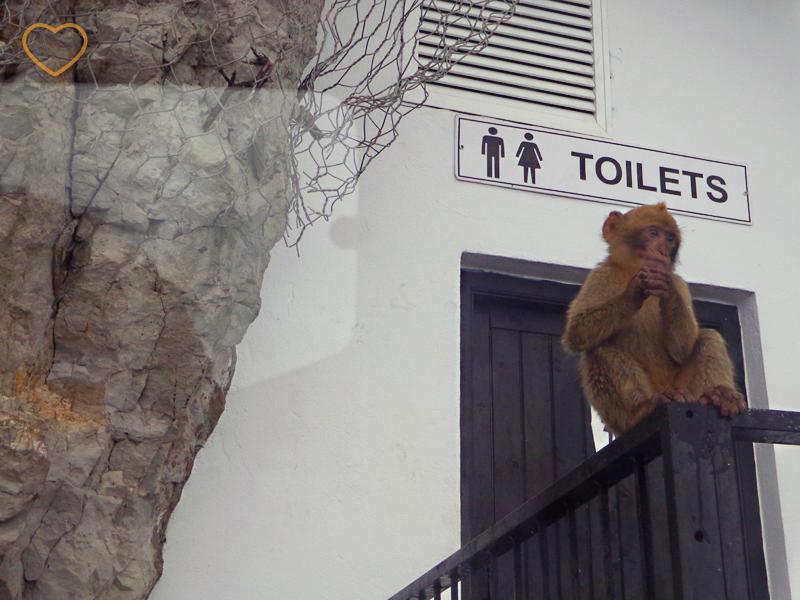Foto de um macaco parado em frente a um banheiro público.