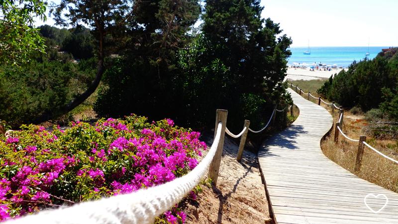 Caminho de madeira, bougainvilles em primeiro plano. No horizonte se vê uma parte do mar bem azul.
