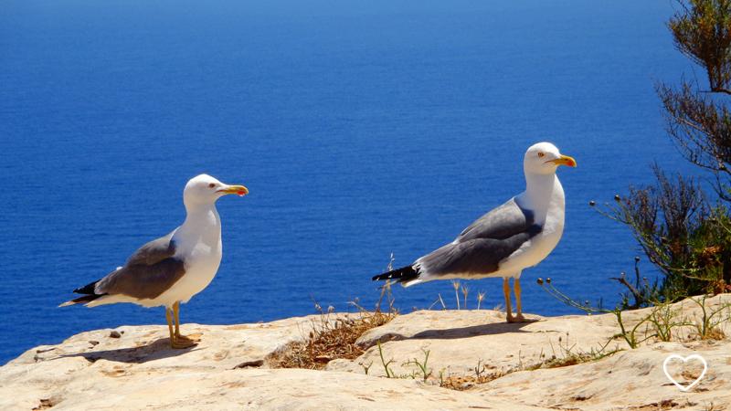 Duas gaivotas e o mar ao fundo.