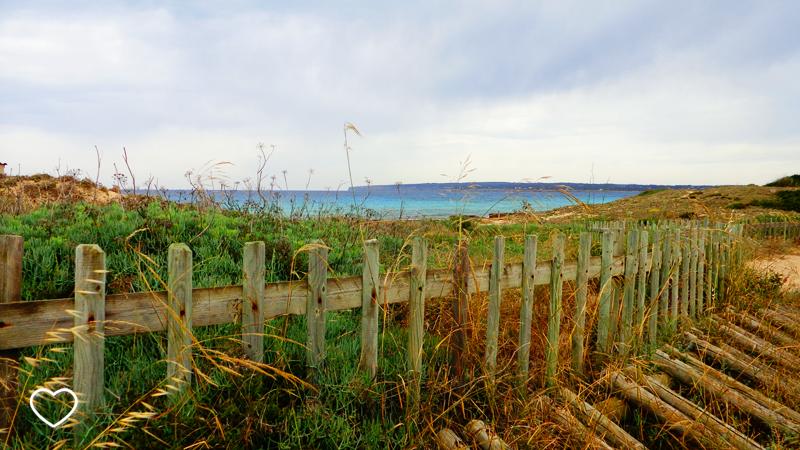 Detalhe de uma cerca, vegetação e o mar ao fundo.