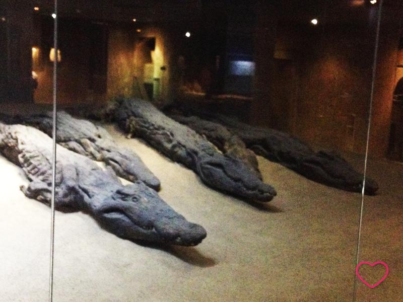 Dentro do museu, algumas múmias de crocodilos.