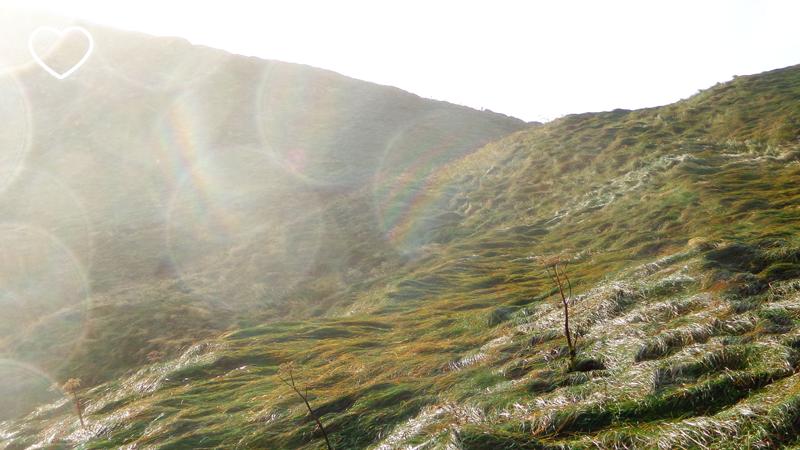 """A colina toda coberta de vegetação """"penteada"""" pelo vento. E gotículas do mar voam contra a lente da câmera."""