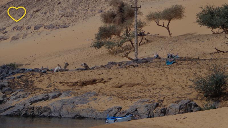 O deserto, de cor bege, com algumas árvores de troncos retorcidos. Há alguns dromedários repousando e algumas pessoas.