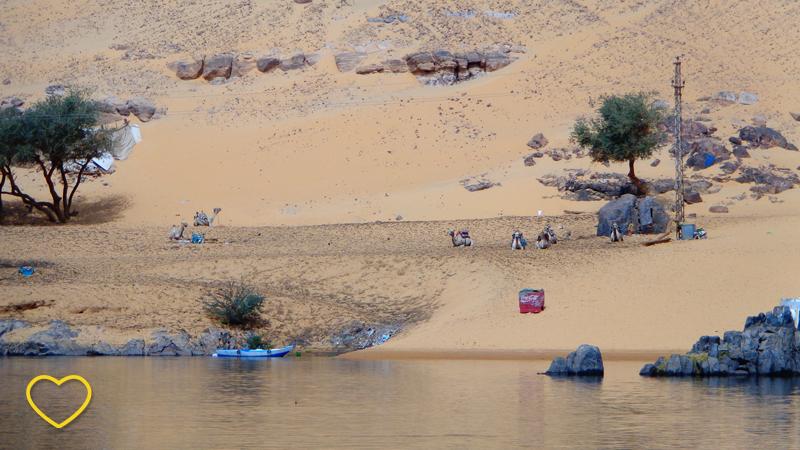 Uma parte do deserto. Raras árvores se vêem. Uma caixa de Coca-cola está na areia. Alguns dromedários e algumas pessoas.