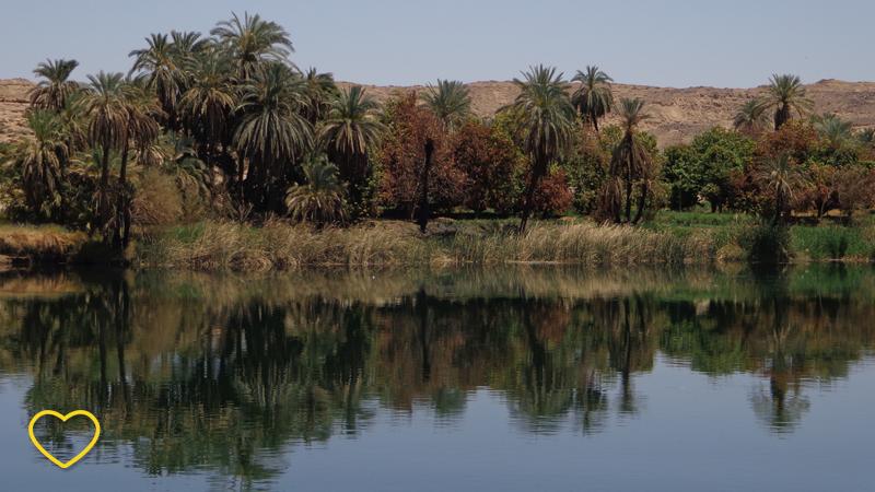 Uma parte da margem com relativamente bastantes árvores, que lembram coqueiros. O verde é terroso e algumas folhas, de outras árvores, são meio avermelhadas. Tudo isto refletido na água.