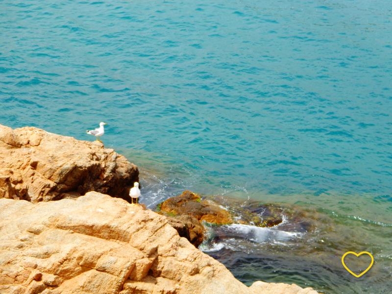 Pedras com duas gaivotas e o mar bem azul turquesa.
