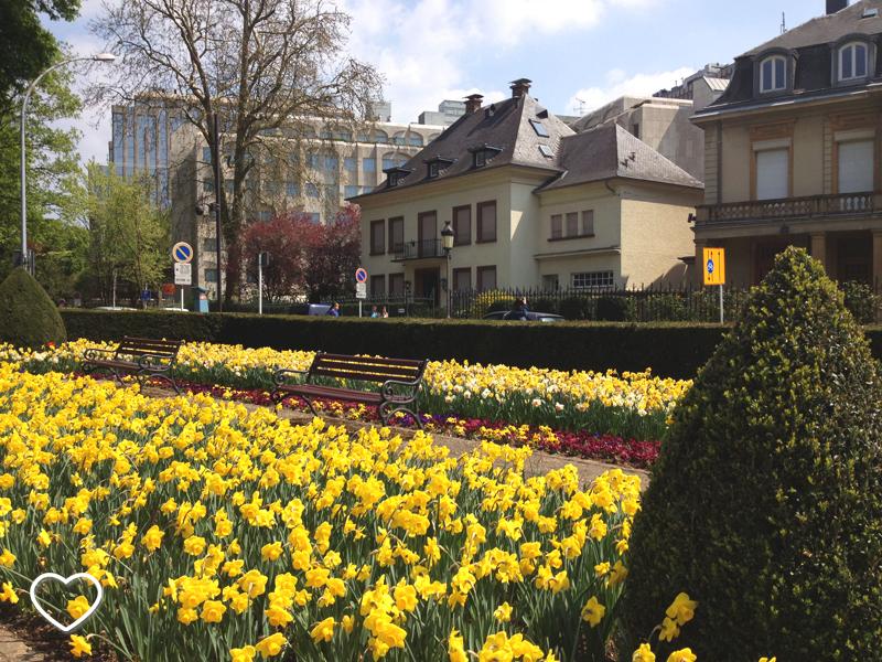 Um lindo jardim de flores amarelas e uma casa grande e no estilo bem clássico.