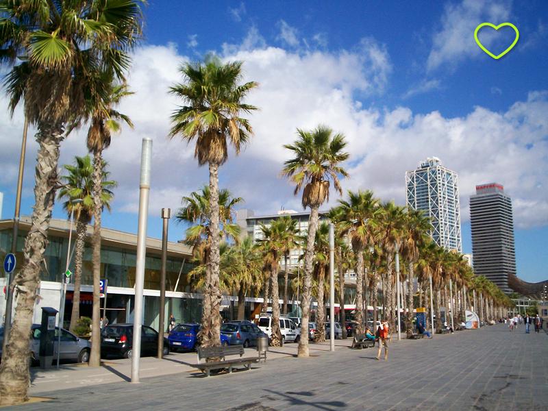 A calçada da praia e a ciclovia. O dia é de sol e palmeiras por toda a orla.
