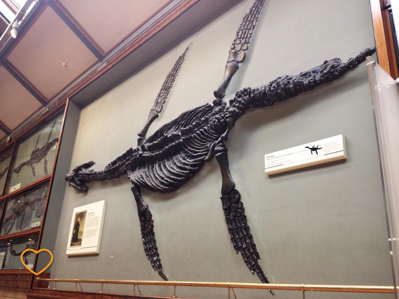 Réplica de esqueleto de plessiosauro na parede.