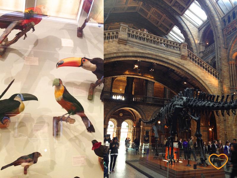 Uma foto de modelos de pássaros e uma do hall de entrada com um esqueleto de diplodocus.