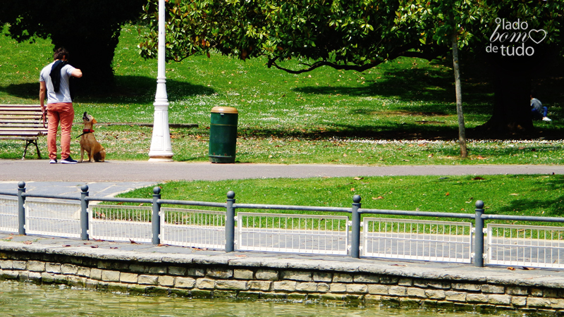 Em um parque, no canto superior esquerdo do enquadramento, estão um cachorro e seu dono.