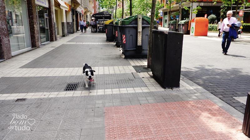 Na cidade, em uma calçada, um bulldog francês vem correndo.