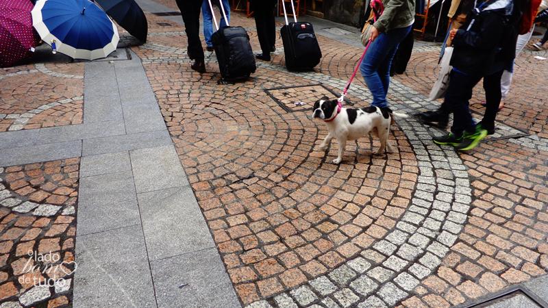 Em um calçadão, um bulldog francês passeia com seus donos.