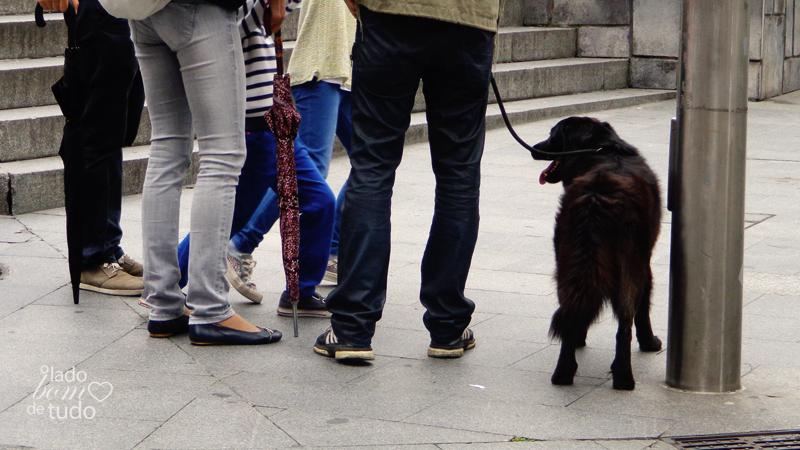 Um cachorro passeia com sua família (de humanos). Os humanos aparecem só das cinturas para baixo.