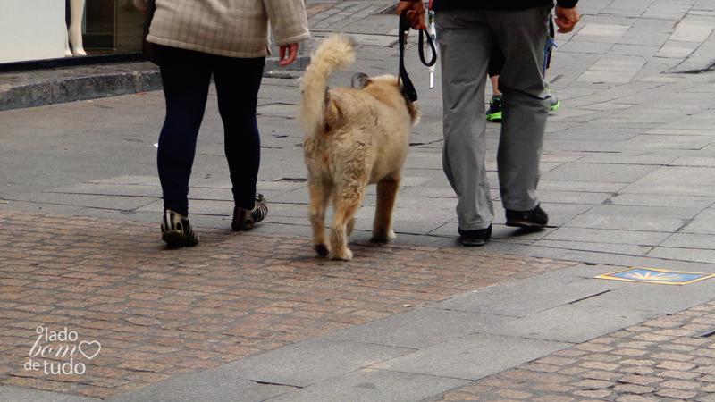 Um cachorro passeia com sua família (de humanos).