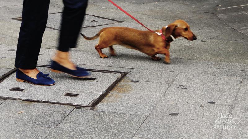 Um dashhund passeia com uma mulher, de quem se vê apenas as pernas.