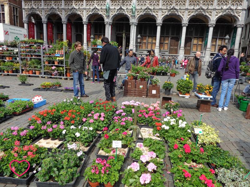 Close nas flores de um mercado temporário na Grand Place. o fundo se vê um pouco da arquitetura do local.