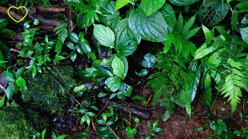 Detalhe das folhagens pela trilha.